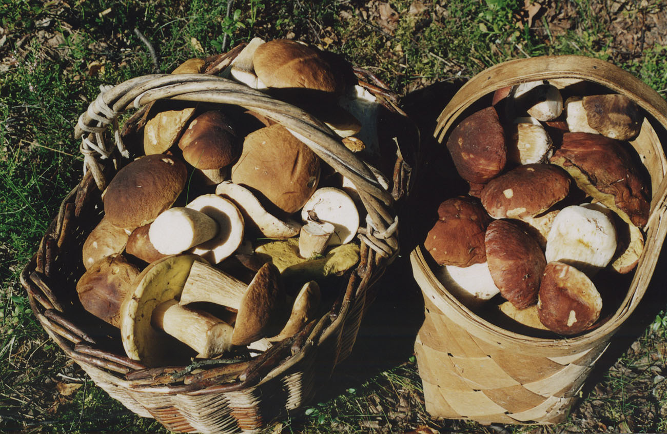 http://ostrova.onego.ru/pix/big/mushrooms.jpg